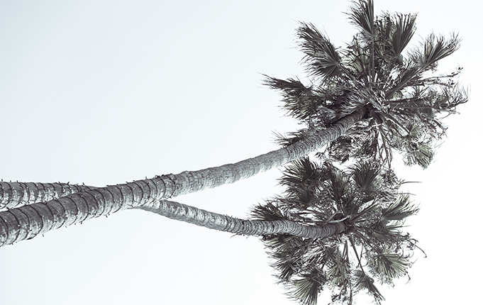 Palm Trees Outside of Advertising